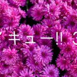 ハイキュー!!ネタバレ 384話「最強の囮・2」